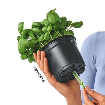 LECHUZA Stolní květináč OJO ALL-IN-ONE akvamarínově zelený